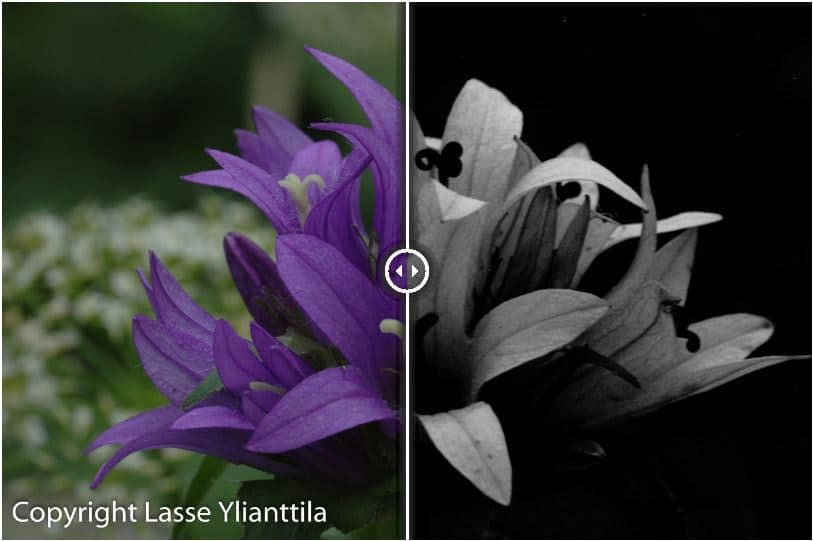 UV+VIS images of plants